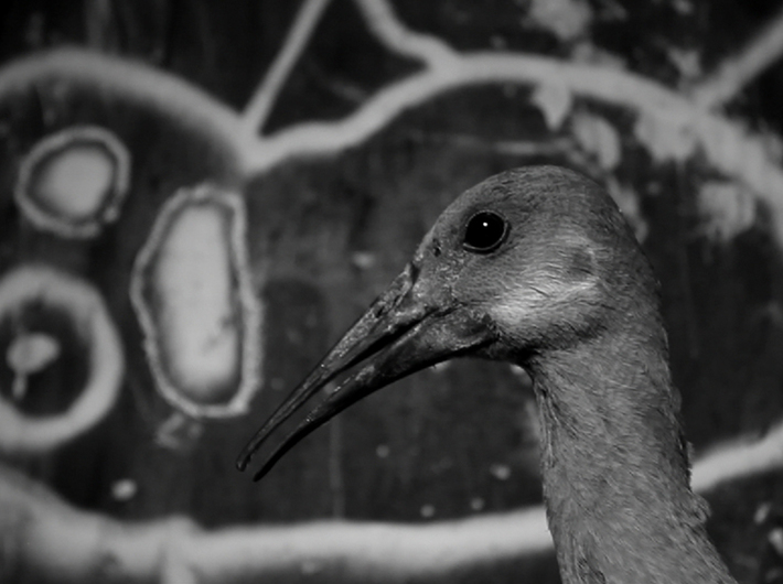 Roger Ballen, //Asylum of the Birds//