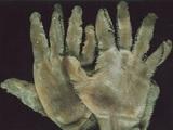 Danny Devos, //Rękawiczki Eda Geina//, 1987, obiekt, 23 × 15 × 1 cm