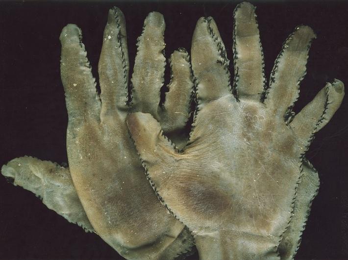 Danny Devos, //Ed Gein Gloves//, 1987, object, 23 × 15 × 1 cm