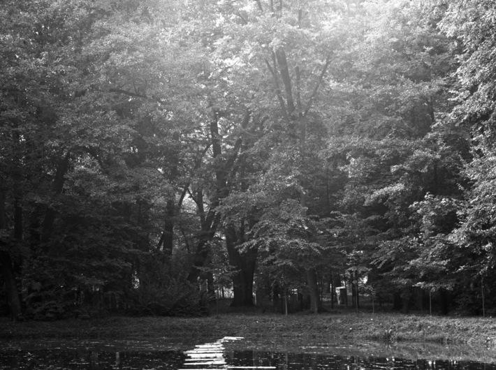 Linia, Orońsko, 1989