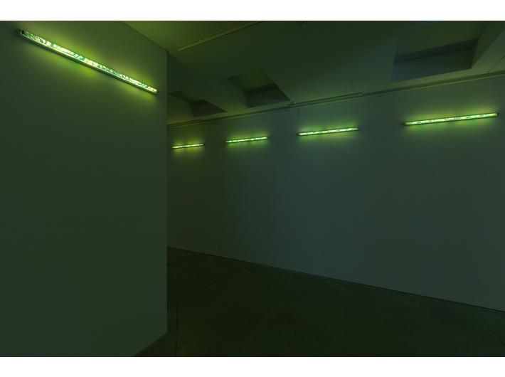 Karolina Kowalska, //Klosze na świetlówki//, 2005, instalacja
