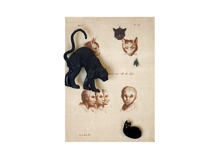 Daniel Spoerri, //Human Face Compared with That of the Cat// (//Figure humaine comparée avec celle du chat//), 1995, assemblage, 140 × 100 × 25 cm, courtesy of D. Spoerri, LEVY Galerie, Hamburg