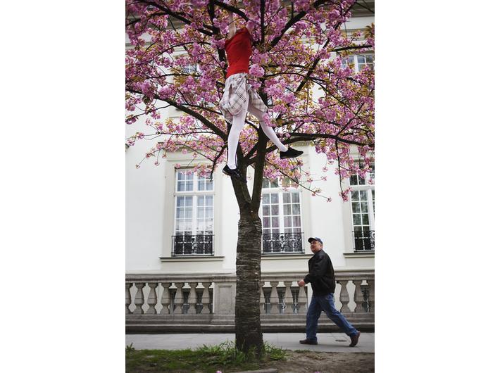 Cecylia Malik, //316. drzewo, ozdobna czereśnia, 28.04.2010, ul. Bosacka//, z serii //365 drzew//, 2009–2010, fotografia, courtesy C. Malik
