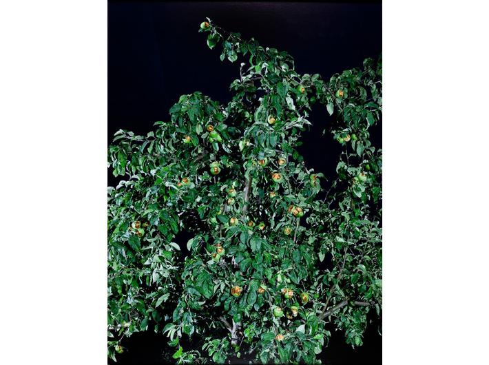 Oskar Dawicki, //Drzewo wiadomości//, 2008, fotografia, 160 × 120 cm, Kolekcja MOCAK-u