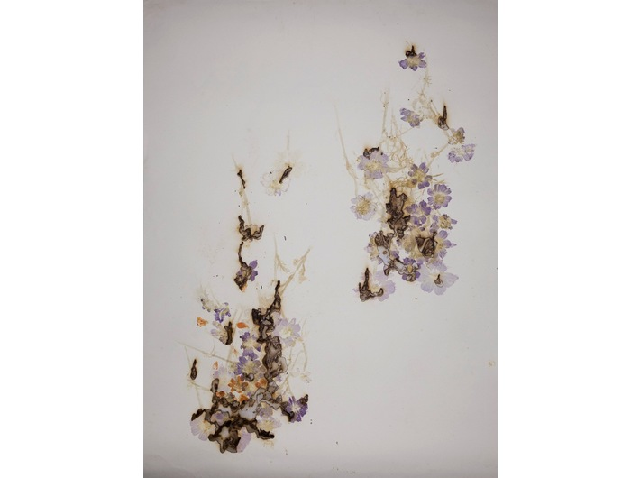 Akira Inumaru, //Ignis fatuus// (//Błędne ogniki//), 2013, kwiaty / papier, 109,5 x 79 cm, Kolekcja MOCAK-u, fot. R. Sosin