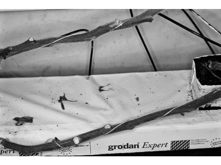 Michael Schmidt, bez tytułu, z cyklu //LEBENSMITTEL//, 2006–2010, gelatin silver print, 56,1 × 81,6 cm, Galerie Nordenhake, Berlin/Sztokholm, © Stiftung für Fotografie und Medienkunst mit Archiv Michael Schmidt