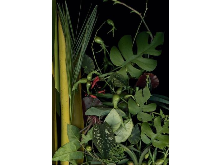 Luzia Simons, //Ogród 11// [Jardim 11], 2014, skanogram, courtesy L. Simions, Galerie Andreas Binder