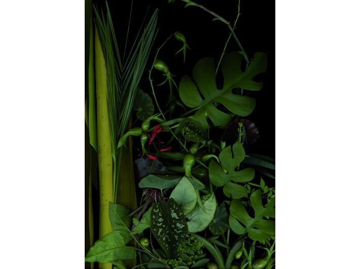 Luzia Simons, //Garden 11// [Jardim 11], 2014, scannogram, courtesy of L. Simions, Galerie Andreas Binder