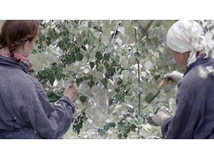 Julius von Bismarck, //Landscape Painting (Forest)//, 2016, wideo, 19 min 40 s, Kolekcja MOCAK-u